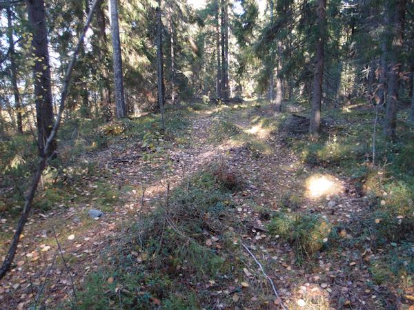Vanhaa metsäkoneuraa